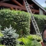 A tall ladder is leaning up against the front of a 3 story home. The ladder is towering over and through the garden in the front yard of the house.